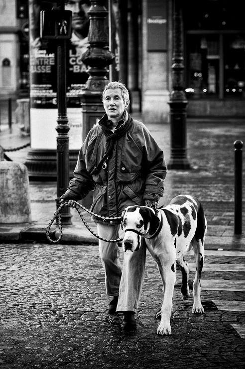 La promenade du gros chien