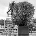Le jardinier du Luxembourg