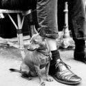 Parisian dog #3