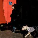 La muselière (masque et chien)