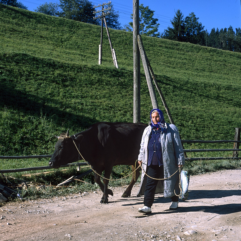 [Ukraine 2019] Dans les Carpates, loin des quelques routes bitumées qui mènent les curistes jusqu'à Rakhiv, la vie dans les campagnes continue avec les allées et venues des propriétaires de fermes les plus reculées. Ils ont souvent une vie modeste et vivent toujours à leur âge parfois avancé du fruit de l'élevage ou du maraîchage.