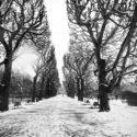 Tombe la neige / Jardin des Plantes
