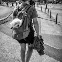 Promenade canine au sac